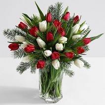15 Christmas Tulips with Fresh Douglas Fir