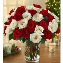 24 Hot Red & White Roses Send To Philippines