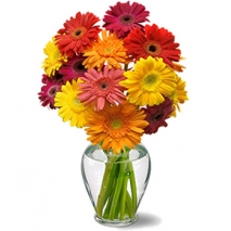Cheery Gerbera Daisies Send To Philippines