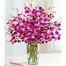 Purple Dendrobium Orchids Send To Philippines