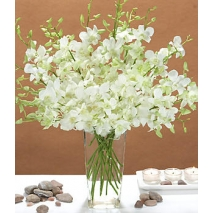 White Dendrobium Orchids Send To Philippines