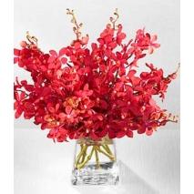 Garnet Orchid Bouquet Send To Philippines