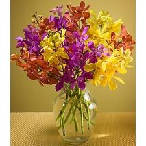 Mokara Orchids Send To Philippines