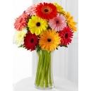 daisies flowers online philippines