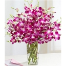 orchids plant online philippines