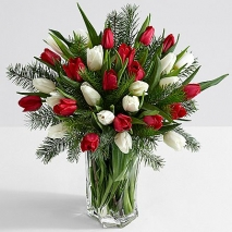 15 Christmas Tulips with Fresh Douglas Fir