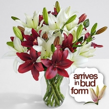 Deluxe Holiday Lilies