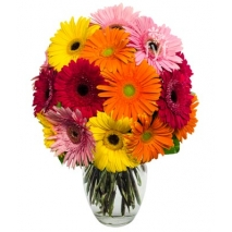 Spring Gerbera Daisies Send To Philippines