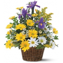 Basket of Shasta Daisies Send To Philippines