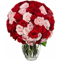 50 Bloom Red Roses Send To Philippines