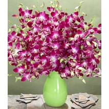 2 dozen Purple Dendrobium Orchids Send To Philippines