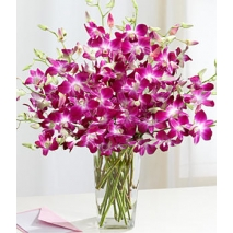 Purple Dendrobium Orchids Send To Philippines