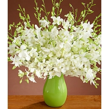 Exotic White Dendrobium Orchids Send To Philippines