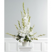 Pure White Gladiolus Delivery To Philippines