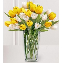 27 Mixed Tulips Send To Philippines