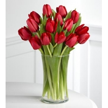 15 Red Tulips Send To Philippines