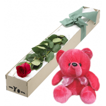 Single Red Rose in Box with Red Bear Send To Philippines