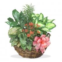 online green basket in philippines