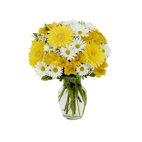 Daisy a Day Bouquet Send To Philippines