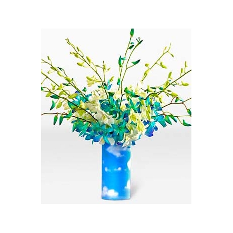 Sky Blue Spring Orchid Send To Philippines