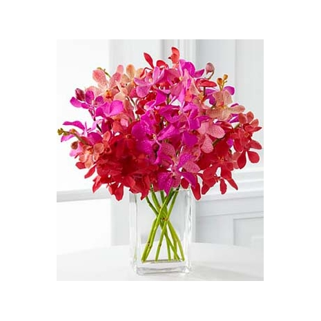 Tickled Pink Orchid Send To Philippines