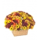 Fresh Daisy Bouquet Send To Philippines